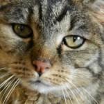 Katze_3